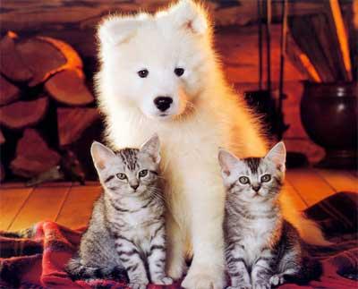 狗为猫猫喂奶